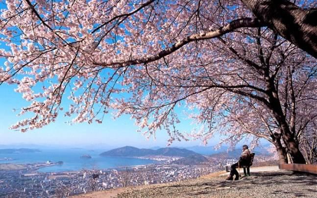 Tour du lịch trượt tuyết Hàn Quốc 5 ngày